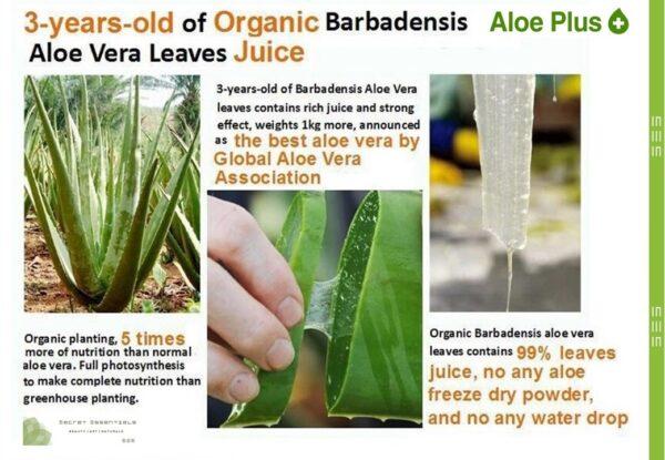 Organic Aloe Plus